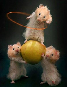 Three dancing hamsters